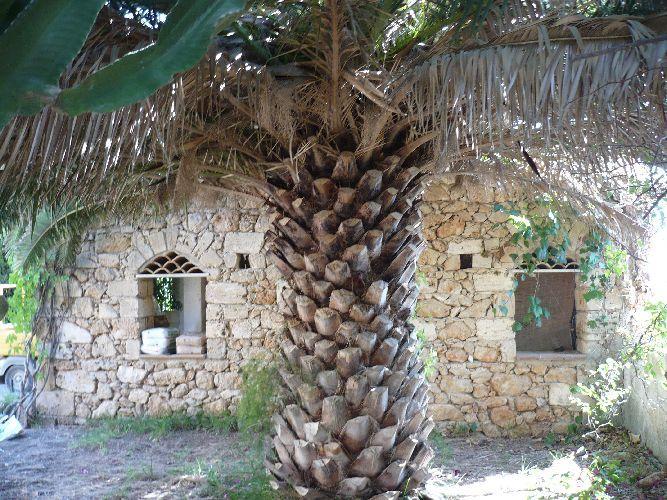 Splendida Villa di 130mq composta da tre camere da letto doppie, soggiorno, cucina, bagno e ampia veranda + dependance di 35 mq con servizi e ripostiglio.   Il lotto è di mq. 500 con alberi e palme di alto fusto. L