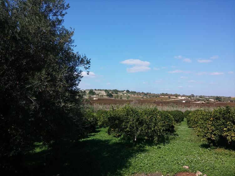In splendida zona agricola con coltivazioni ad Agrumeto e vigna nero d